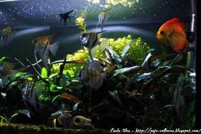 Otro motivo de la Naturaleza, el Mar, los peces
